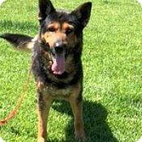 Adopt A Pet :: Jeremy - La Mesa, CA