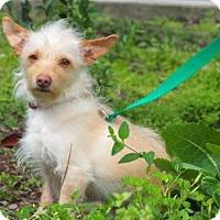 Adopt A Pet :: Cheyenne - Palo Alto, CA
