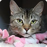 Adopt A Pet :: Karma - Sarasota, FL