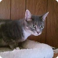 Adopt A Pet :: Sweety - Bensalem, PA