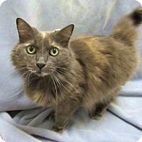 Adopt A Pet :: MOONBEAM - Lexington, NC