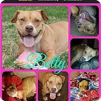 Adopt A Pet :: Betty - Ft Worth, TX