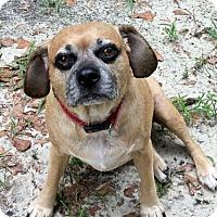 Adopt A Pet :: Duke - Camden, SC