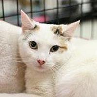Adopt A Pet :: Bonniebelle - Westerly, RI