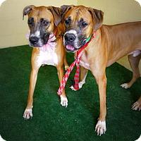 Adopt A Pet :: Hoasak - Casa Grande, AZ