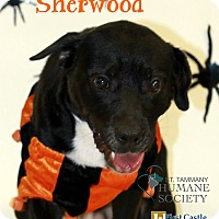 Adopt A Pet :: Sherwood - Covington, LA