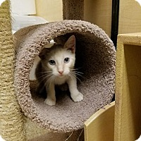 Adopt A Pet :: Evan - Arlington/Ft Worth, TX