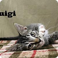 Adopt A Pet :: Luigi - Melbourne, KY