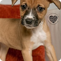 Adopt A Pet :: Ty - Inglewood, CA