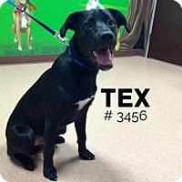 Adopt A Pet :: Tex - Alvin, TX