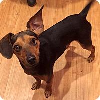 Adopt A Pet :: Dustin - Holliston, MA