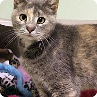 Adopt A Pet :: Dizzy - Murphysboro, IL