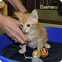 Adopt A Pet :: Dasher - Slidell, LA