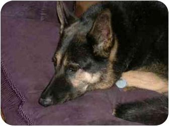 Dog Rescue Blacksburg Va