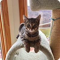 Adopt A Pet :: Moe - Whitehall, PA