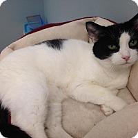 Adopt A Pet :: Allison - Byron Center, MI