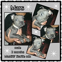 Adopt A Pet :: Mars - Richmond, CA