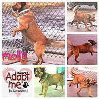 Adopt A Pet :: Molly - Peru, IN
