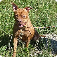 Adopt A Pet :: # 138-13 RESCUED! - Zanesville, OH
