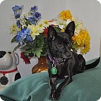 Adopt A Pet :: Ruthie - Tumwater, WA