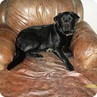 Adopt A Pet :: Splash - Toluca Lake, CA
