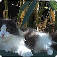 Adopt A Pet :: Emily - Bonita Springs, FL