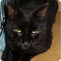 Adopt A Pet :: Slinky - Westfield, MA