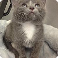 Adopt A Pet :: Bobby - Chandler, AZ