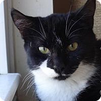 Adopt A Pet :: Sadie - Colmar, PA