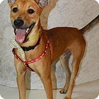 Adopt A Pet :: Carlos - Surrey, BC