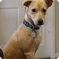 Adopt A Pet :: Sam - Knoxville, TN