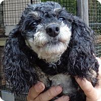 Adopt A Pet :: Phantom - Crump, TN