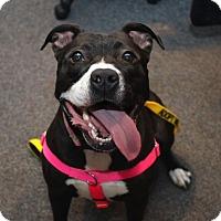 Adopt A Pet :: Winnie - Newtown, CT