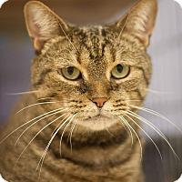 Adopt A Pet :: Tater - Circleville, OH