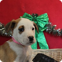 Adopt A Pet :: Avery - Waldorf, MD
