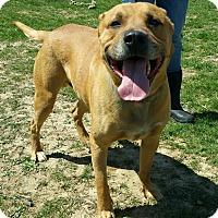 Adopt A Pet :: Gumdrop - Lisbon, OH