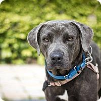 Adopt A Pet :: Parsley - Berkeley, CA