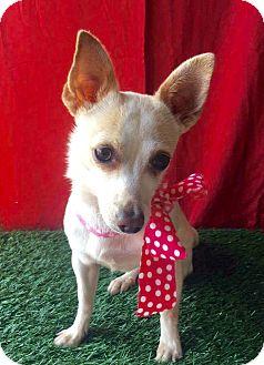 Chihuahua Mix Dog for adoption in Corona, California - MIMI