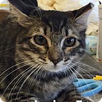 Adopt A Pet :: Ludo - Brandon, FL