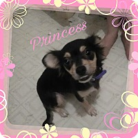 Adopt A Pet :: Princess - Walker, LA