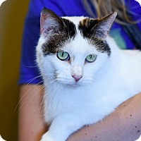 Adopt A Pet :: Harmony - St Paul, MN