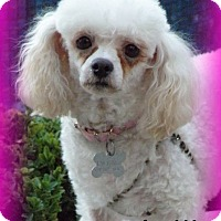 Adopt A Pet :: Dollie - Anaheim Hills, CA
