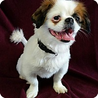 Adopt A Pet :: Victor Montgomery - Urbana, OH