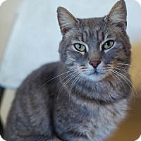 Adopt A Pet :: CALVIN - Decatur, GA
