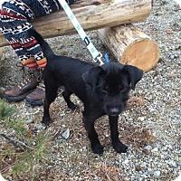 Adopt A Pet :: Duke Ellington Camo in RI COME MEET ME!! - Providence, RI