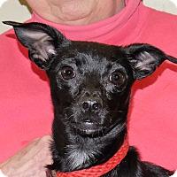 Adopt A Pet :: Minnie - Spokane, WA