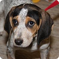 Adopt A Pet :: Birdy - Orland Park, IL
