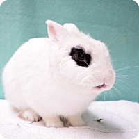 Adopt A Pet :: Zed - Fountain Valley, CA