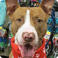 Adopt A Pet :: Buddy - Smithfield, NC