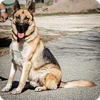 Adopt A Pet :: Hunter - Daleville, AL